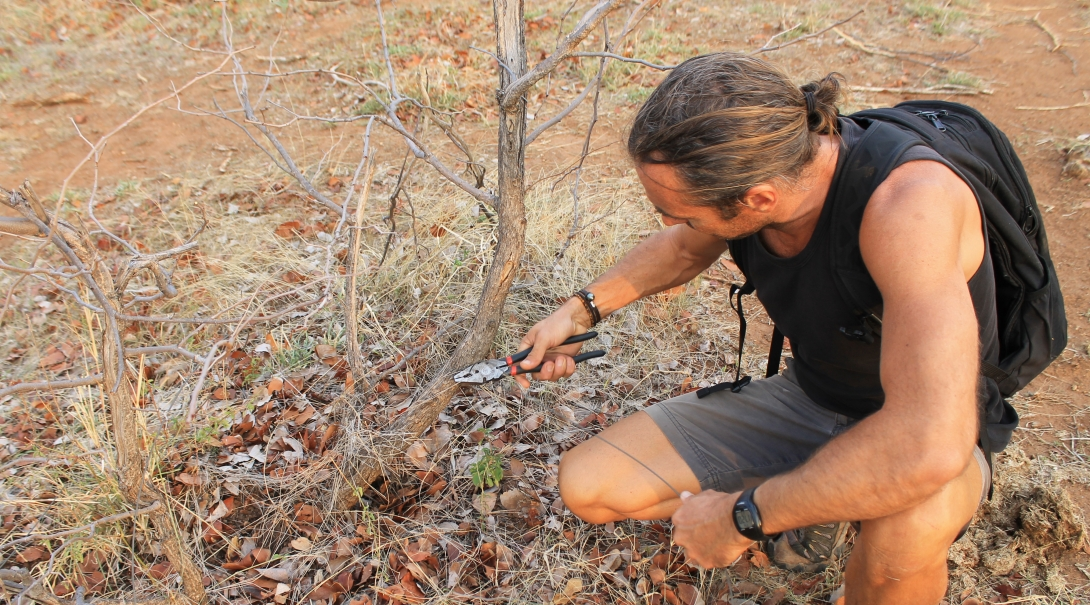 A Conservation volunteer removes a poaching snare while volunteering abroad in 2019.